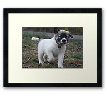 Coming Grammy! Framed Print