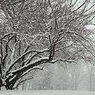 Winter's Wild Play by reindeer