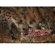 Spotted Hyena Scavenging at Night Photographic Print