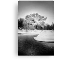 Winters Tree Canvas Print