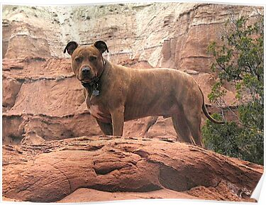 Rocky in Kodachrome Basin State Park by Darcy Grizzle