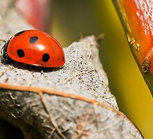 Ladybird among the old and new of a willow tree by Eugene Francis Cummings