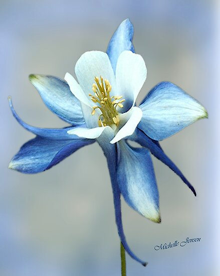 Blue Columbine by WishesandWhims
