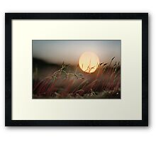 Sun Worshipers Framed Print