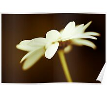 I like daisies with my morning coffee Poster