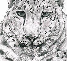 Snow Leopard by Lisa Lawrence