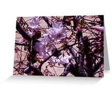 cherry trees new flowers Greeting Card