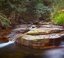 New Town Rivulet #16, Tasmania by Chris Cobern