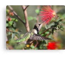 A Taste for Nectar  Canvas Print