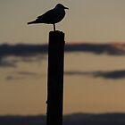 Seagull Silhouette by Noel Elliot