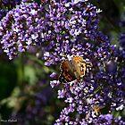 Announcing Spring by Nira Dabush