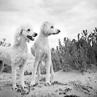 Dudley & Willow by pipsqueaksphoto
