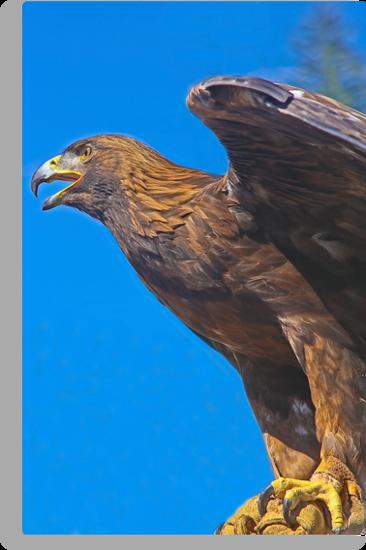 Golden Eagle by heatherfriedman
