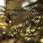 Pine  Bokeh by EkaterinaLa