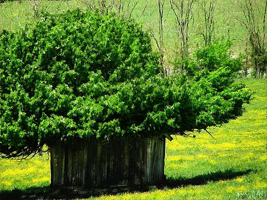 Arkansas Hill Billy Tree House????? by NatureGreeting Cards ©ccwri
