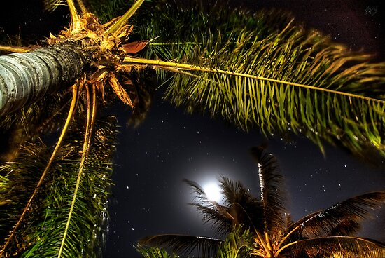 Hammock View at Night (HDR) by James Zickmantel
