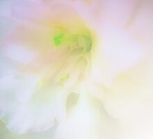 A Pink Whisper by Barbara  Brown