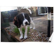 Benson my little Boy Poster