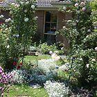 my rose garden arch   by lettie1957