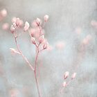 softly by Iris Lehnhardt