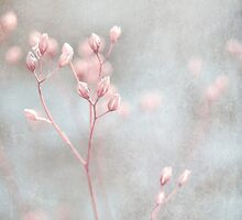 softly by Iris Lehnhardt