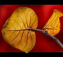 Leaf of Lanzarote by John44