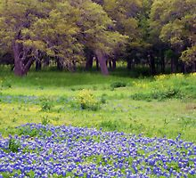 Pasture Blue Bonnets by Bill Morgenstern