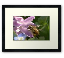 Bee's Paradise Framed Print