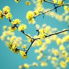 Yellow spring blooms by woodnimages