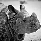 Black Rhino by Jeff Palm Photography