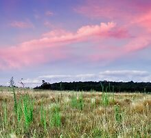 The Grassy Knoll by Mark  Lucey