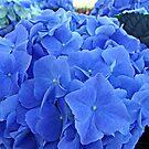 Blue Hues by Tammy Devoll