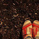 Shoes in the Mulch by Kerri Swayze