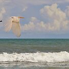 The Great Egret &amp; The Ocean by Kathy Baccari