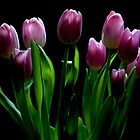 A Bunch of Spring Tulips by toby snelgrove  IPA