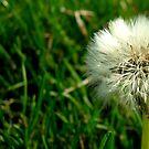Make a Wish by Kerri Swayze