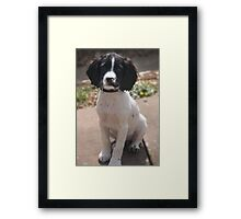 Benson at 12 weeks Framed Print