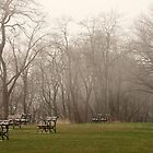 Lake Park Foggy Landscape by Thomas Murphy