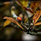 Autumn's fruit by digiphotography