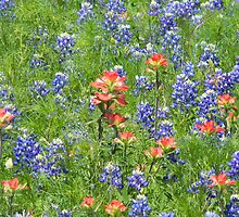 Mystic Indian...Paintbrush!  view larger by Navigator