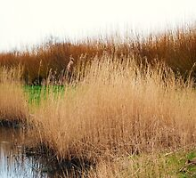 watery willow  by shireengol