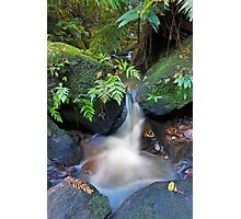 Dante's Creek Photographic Print