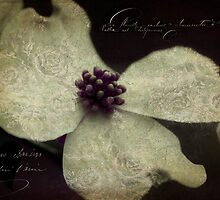 Dogwood Lace by Karen Lewis