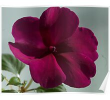 Flower in the Window Poster