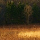 Illinois prairie by Lisa Bianchi