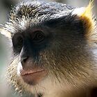 Pensive Monkey by jonlarr31