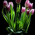 Spring Tulips in Vase by toby snelgrove  IPA