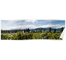 Rippon vineyard, Lake Wanaka Poster