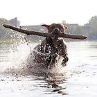 Dog, splash, stick...right moment in the water by photobylorne