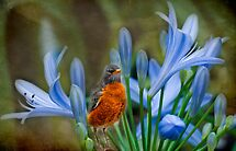 Robin in flowers by LudaNayvelt